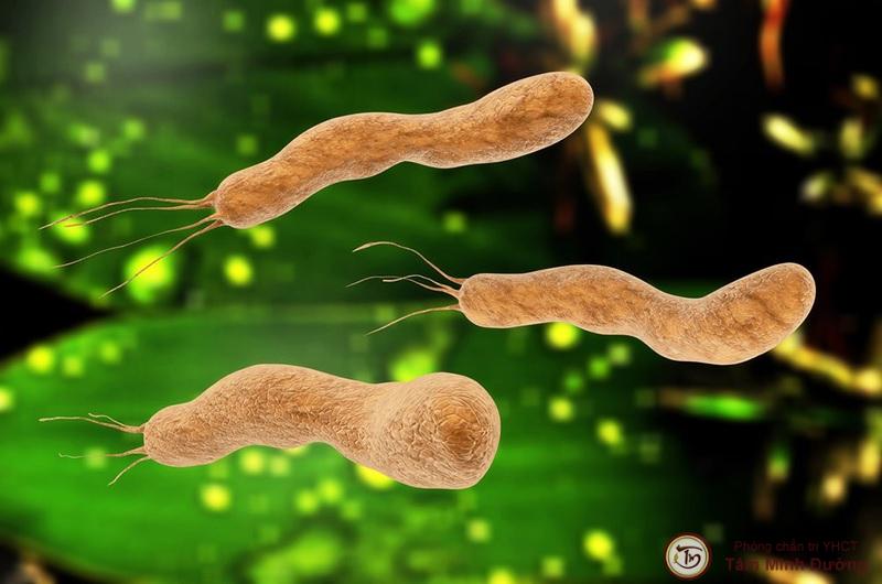 Vi khuẩn HP sinh ra từ đâu